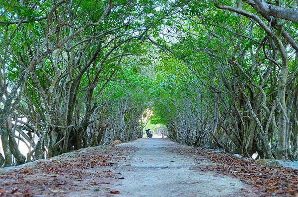 Ru-Cha-Hue-mangrove-forest-1