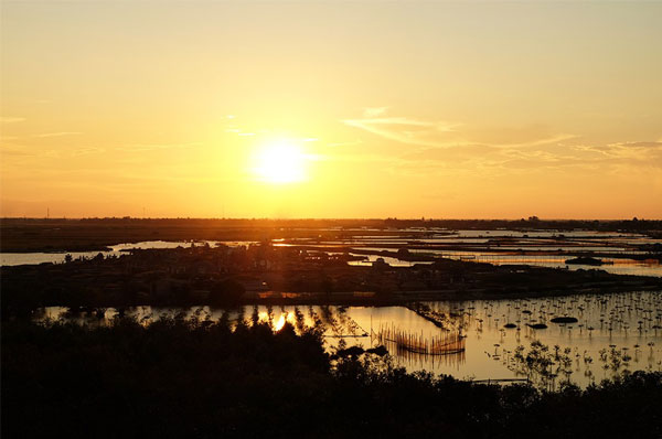 Ru-Cha-Hue-mangrove-forest-2