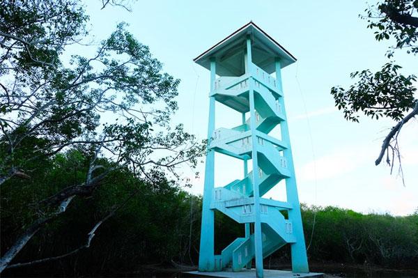 Ru-Cha-Hue-mangrove-forest-4