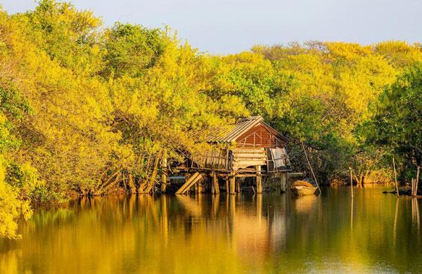 Ru-Cha-Hue-mangrove-forest-5